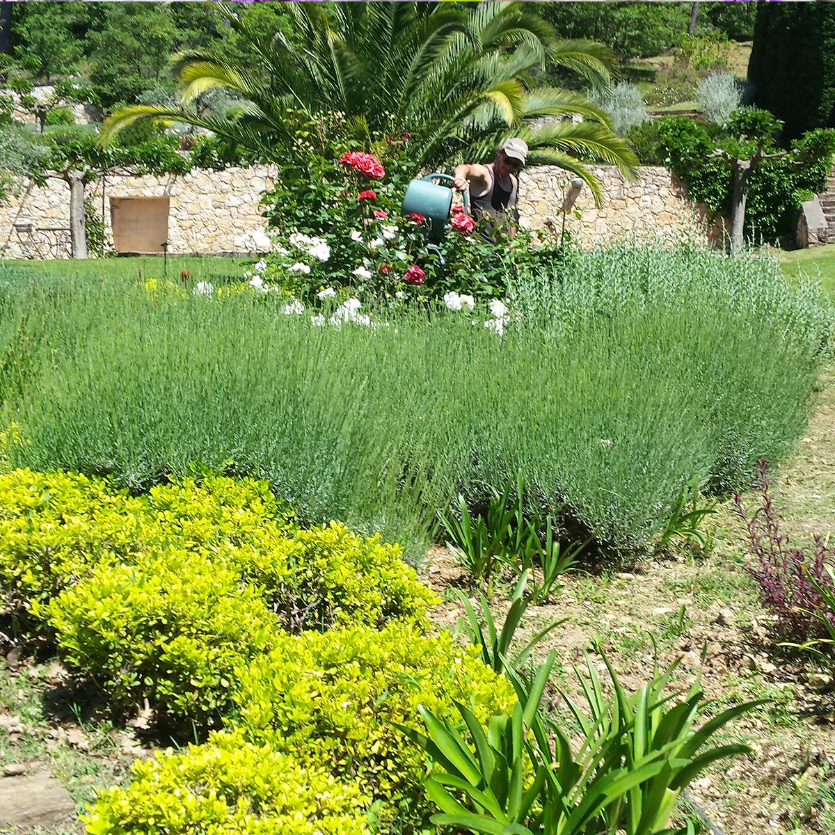 Entretien annueel de votre jardin nature espaces for Tarif creation gazon