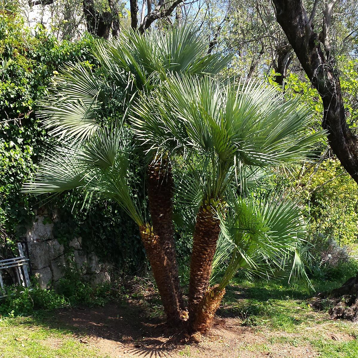 Taille arbre arbuste jardin nature espaces paysages nep for Entretien de jardins