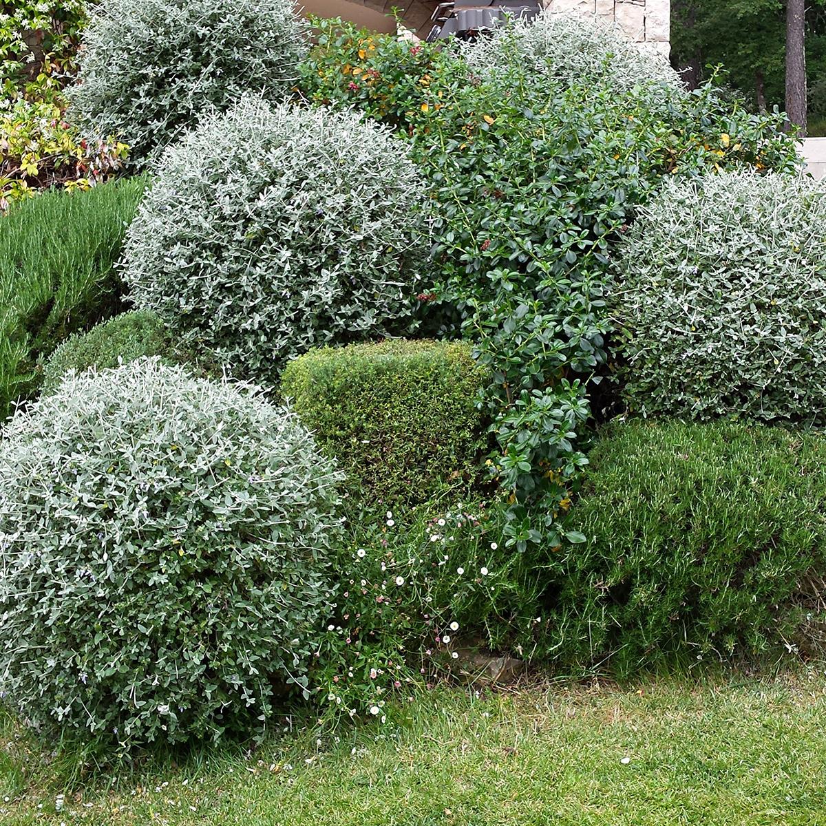 Taille vegetaux nature espaces paysages nep cr ation for Entretien de jardins